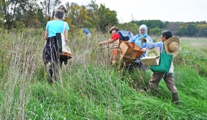 Volunteer workers holding bags and collecting seed in meadow