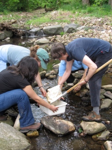 3 adult trainees collecting samples in a creek