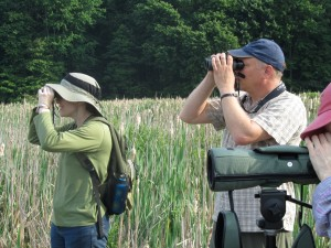 Adults, standing in marsh, looking through binoculars at something