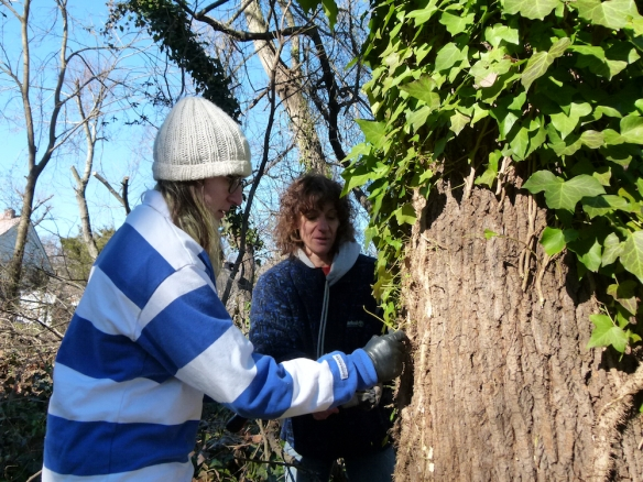 Rebecca Frank and daughter Myriah cutting ivy. Myriah is a member of the TC Williams High School Environmental Club.
