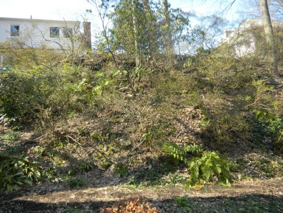 Rear hill with Azalea, Mountain Laurel and many species of Ferns.