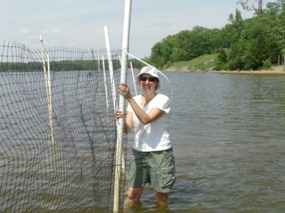 Master Naturalist Melissa Perez holds up a support post while awaiting additional cable ties for the screen.