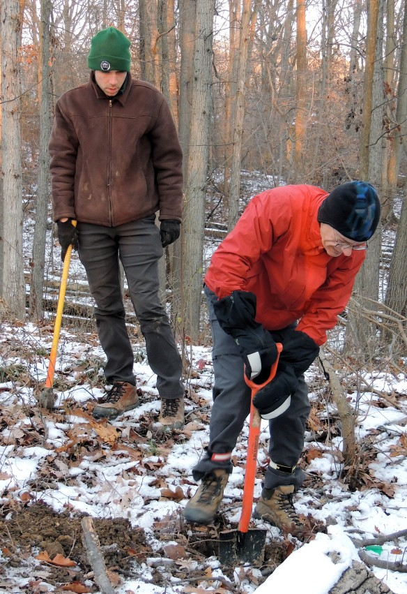 Mattock at hand to break up roots, Arlington County Forester Vincent Verweij supervises ARMN volunteer Jerry Cowden as he digs a hole to receive a chestnut sapling at Long Branch Nature Center.