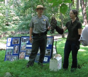 Erik Oberg and Gabby Hrycyshyn with the rehabilitated red shouldered hawk
