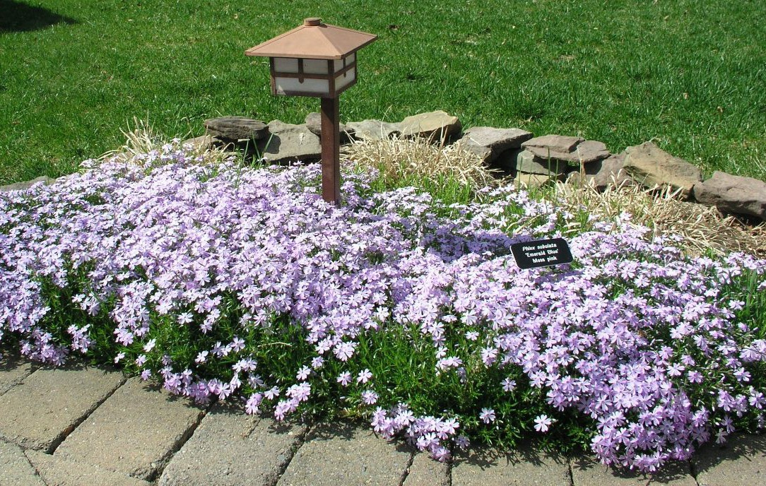 Five Favorite Woody And Perennial Native Plants