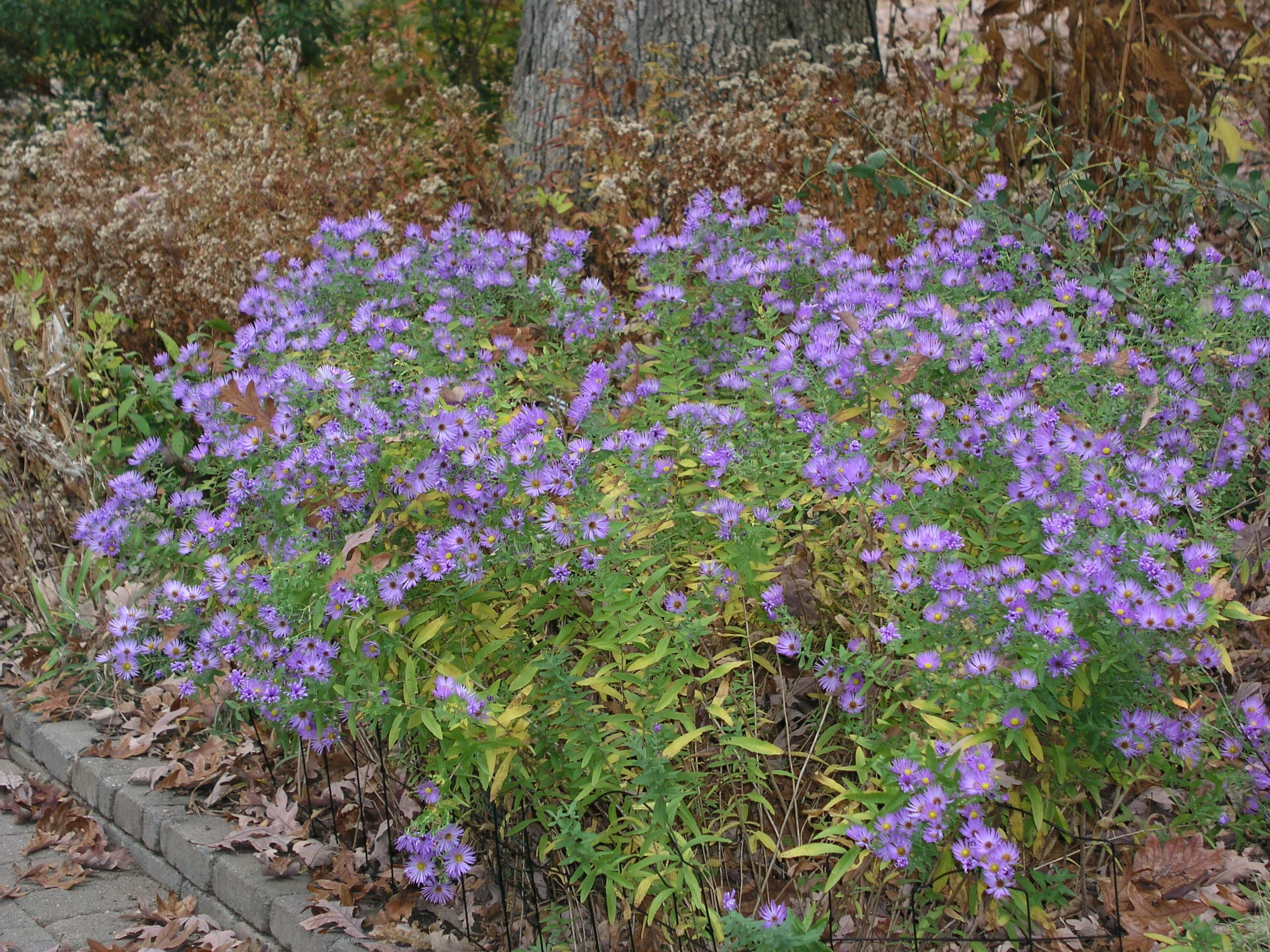 Fall Is A Great Time To Plant Trees And Perennials Especially