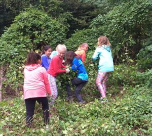 Gunston sixth graders tackle invasives.