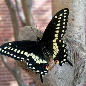 Photo of a butterfly on a tree