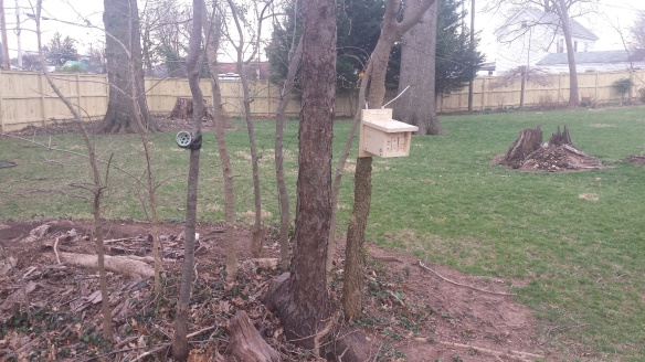 Photo of bee hotels used in UVA study of native mason bees