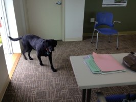Photo of dog at Wetland Studies Solutions office