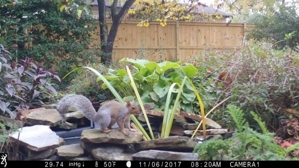 Camera trap photo from ARMN Member Louis Harrell