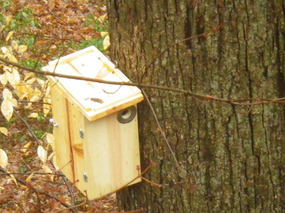 Photo of southern flying squirrel nest box in ARMN Member Kasha Helget's yard