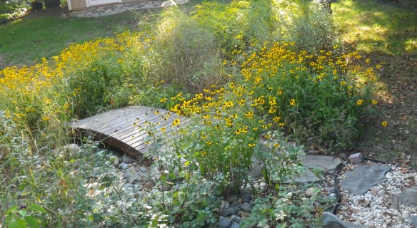 Photo of Black Eyed Susans