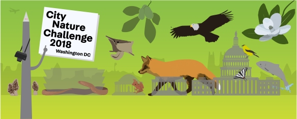 Banner image for City Nature Challenge 2018