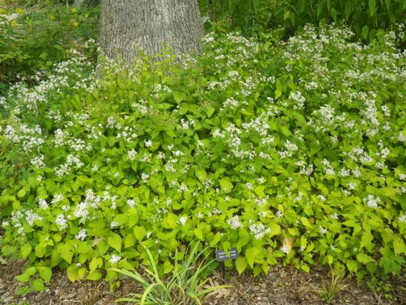 Photo of a green plant with small white flowers surrounding a tree trunk