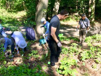 Six ARMN volunteers plant vegetation under a tree.