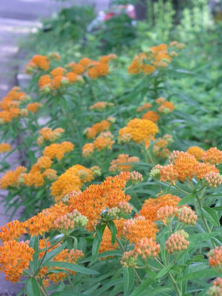 Photo of orange flowers