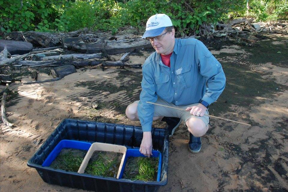 Photo of Paul squatting next to a tub of aquatic grasses on a beach