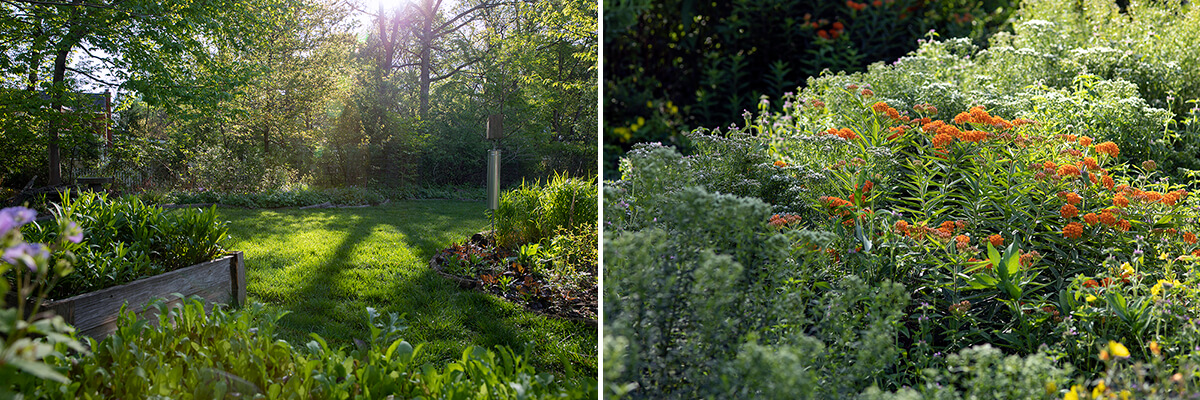 Left: Photo of a backyard with garden beds. Right: Photo of wildflowers