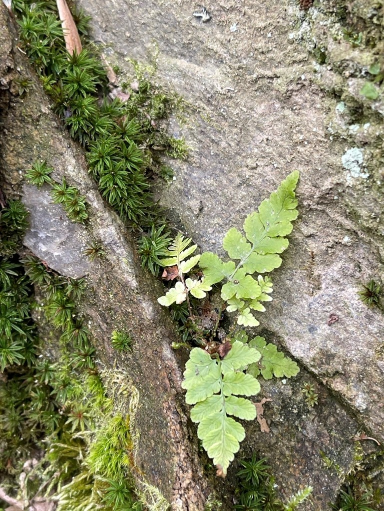 Photo of plants on a rock face