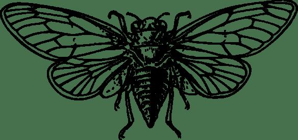 Clip art of a cicada