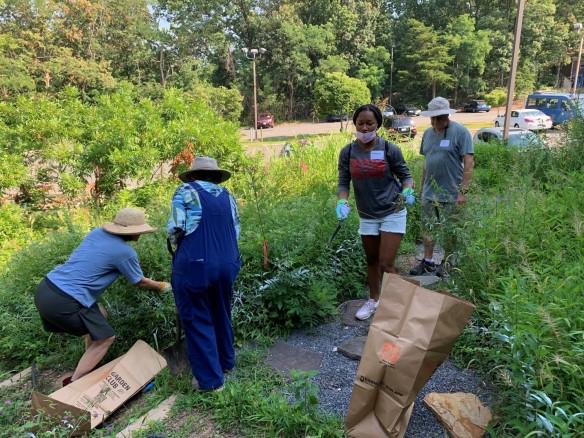 Photo of volunteers pulling weeds