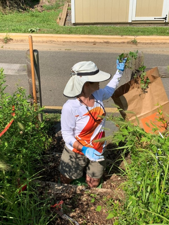 A volunteering adding weeds to a yard waste bag