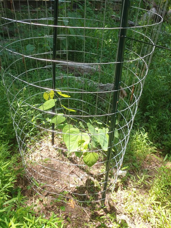Photo of a tree sapling in a protective cage
