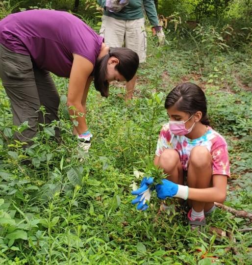 Photo of two volunteers removing invasive plants